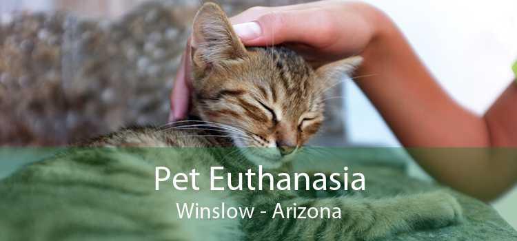 Pet Euthanasia Winslow - Arizona