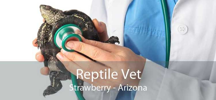 Reptile Vet Strawberry - Arizona