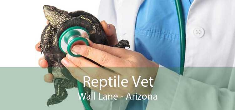 Reptile Vet Wall Lane - Arizona