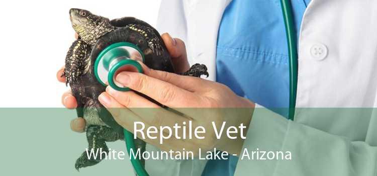 Reptile Vet White Mountain Lake - Arizona