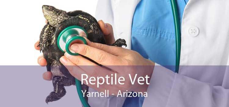 Reptile Vet Yarnell - Arizona