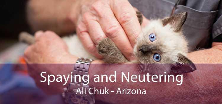 Spaying and Neutering Ali Chuk - Arizona