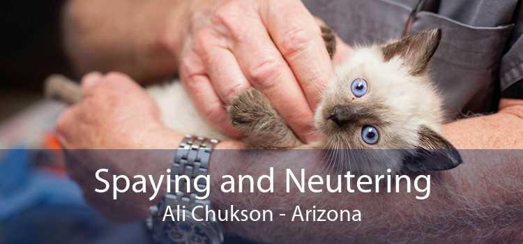 Spaying and Neutering Ali Chukson - Arizona