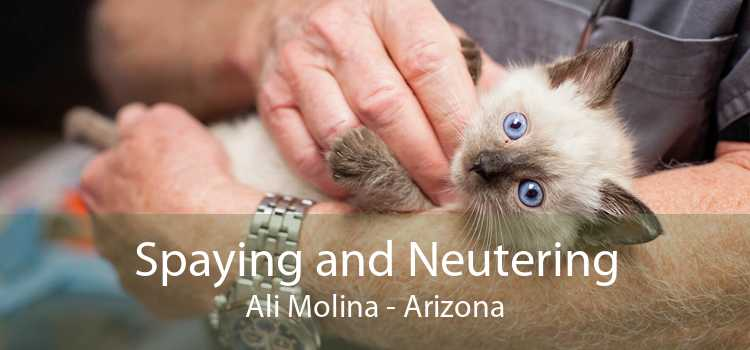 Spaying and Neutering Ali Molina - Arizona