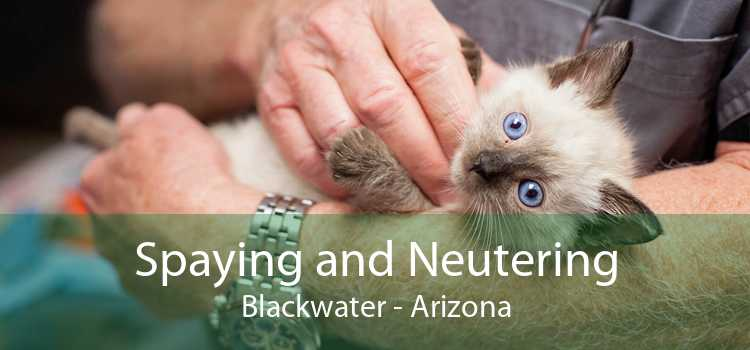 Spaying and Neutering Blackwater - Arizona