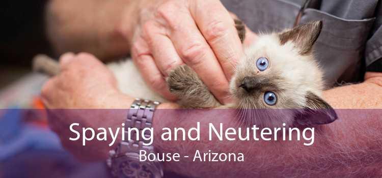 Spaying and Neutering Bouse - Arizona