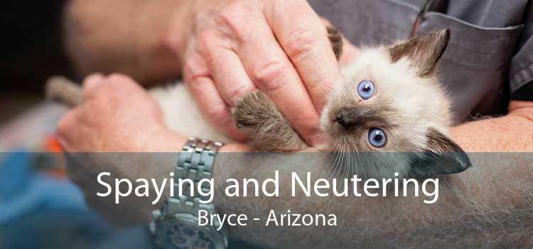 Spaying and Neutering Bryce - Arizona