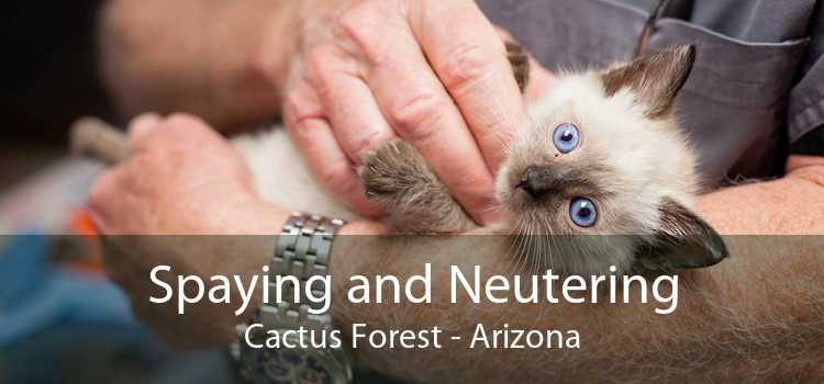 Spaying and Neutering Cactus Forest - Arizona