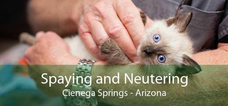 Spaying and Neutering Cienega Springs - Arizona