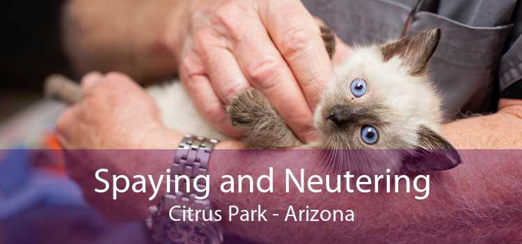 Spaying and Neutering Citrus Park - Arizona