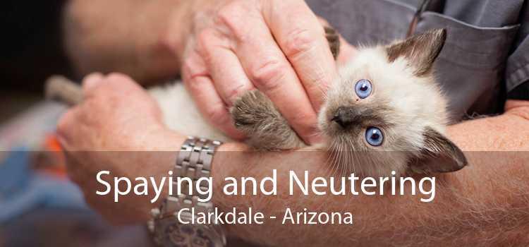 Spaying and Neutering Clarkdale - Arizona