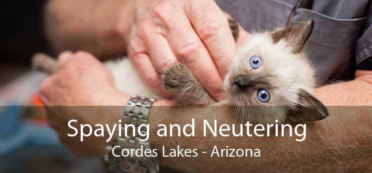 Spaying and Neutering Cordes Lakes - Arizona