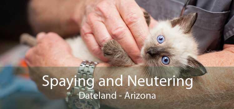 Spaying and Neutering Dateland - Arizona