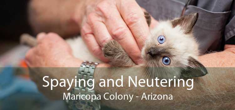 Spaying and Neutering Maricopa Colony - Arizona