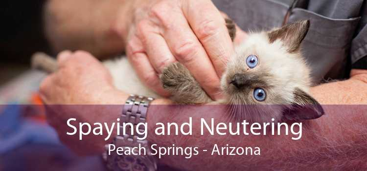 Spaying and Neutering Peach Springs - Arizona