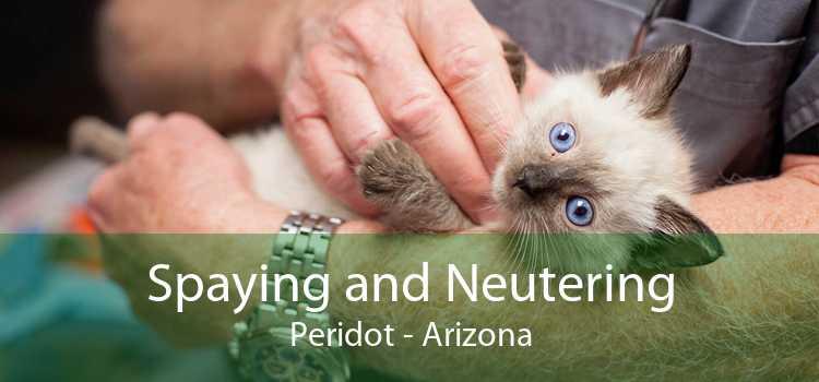 Spaying and Neutering Peridot - Arizona