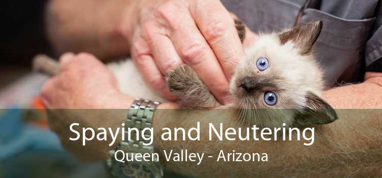 Spaying and Neutering Queen Valley - Arizona
