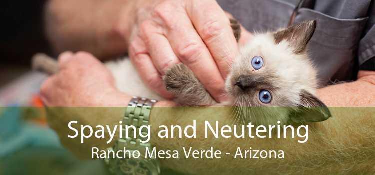 Spaying and Neutering Rancho Mesa Verde - Arizona