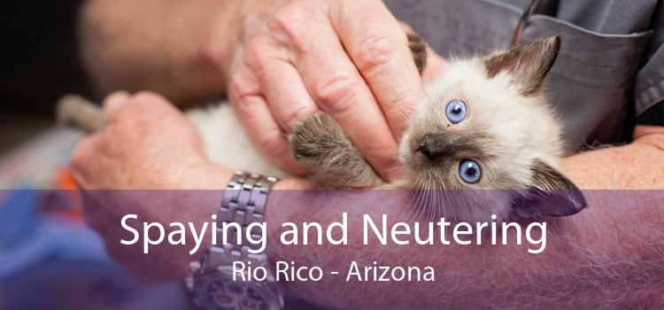 Spaying and Neutering Rio Rico - Arizona