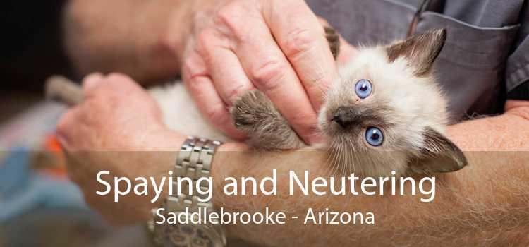 Spaying and Neutering Saddlebrooke - Arizona