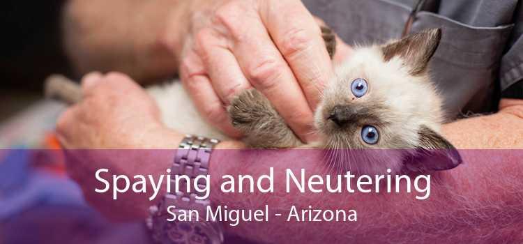 Spaying and Neutering San Miguel - Arizona