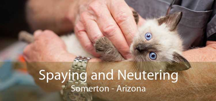 Spaying and Neutering Somerton - Arizona