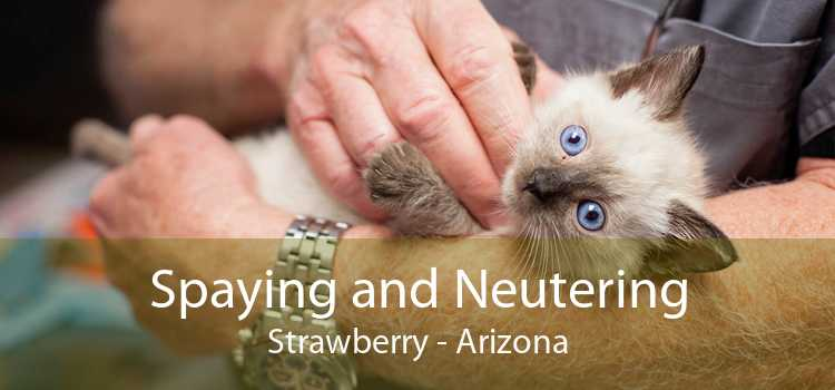 Spaying and Neutering Strawberry - Arizona