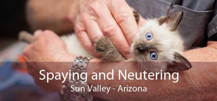 Spaying and Neutering Sun Valley - Arizona