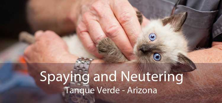 Spaying and Neutering Tanque Verde - Arizona