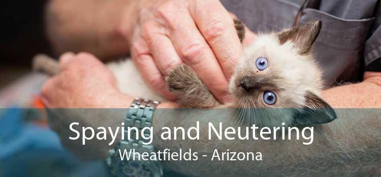 Spaying and Neutering Wheatfields - Arizona