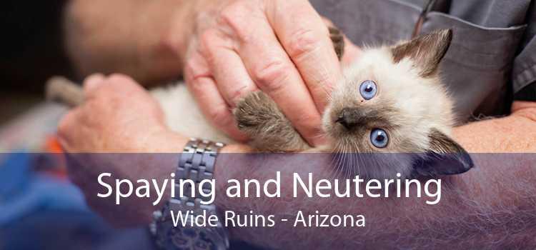 Spaying and Neutering Wide Ruins - Arizona