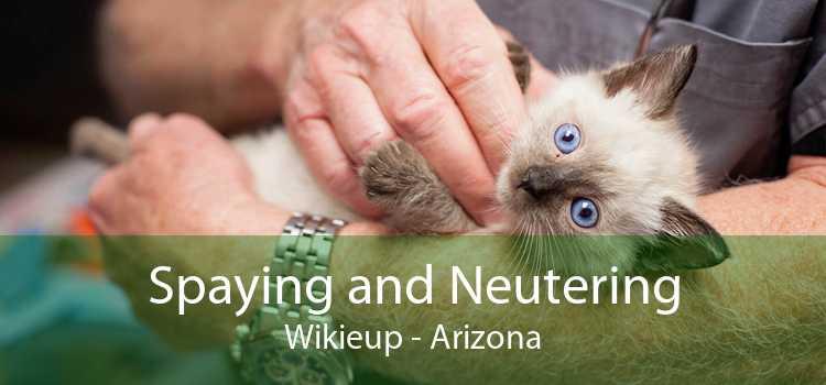 Spaying and Neutering Wikieup - Arizona