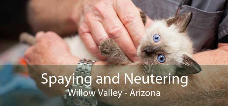 Spaying and Neutering Willow Valley - Arizona