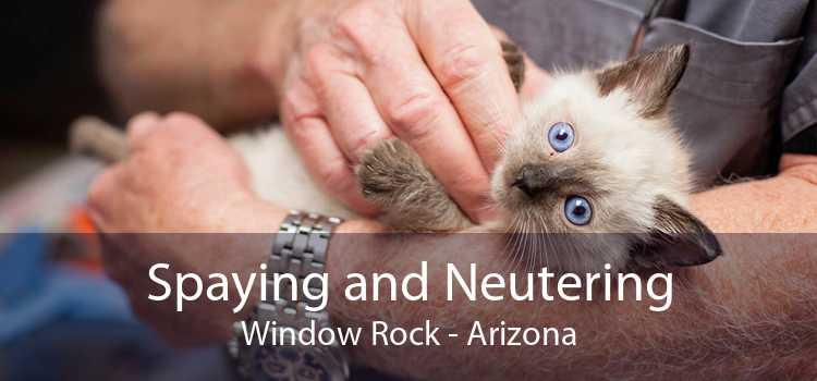 Spaying and Neutering Window Rock - Arizona