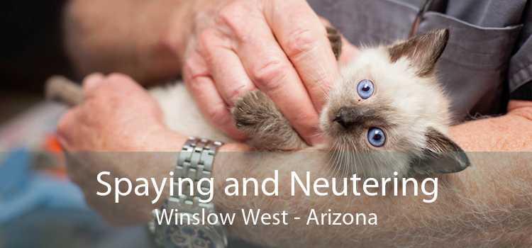 Spaying and Neutering Winslow West - Arizona