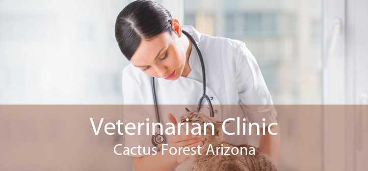 Veterinarian Clinic Cactus Forest Arizona