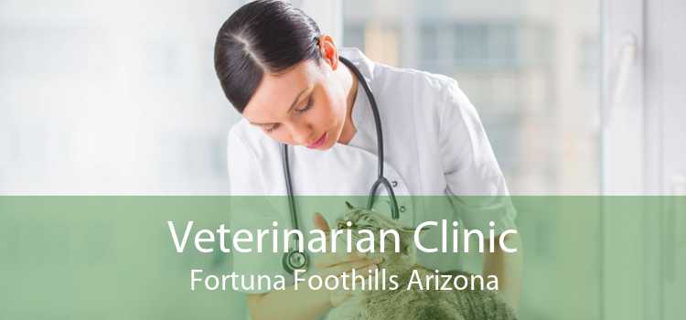 Veterinarian Clinic Fortuna Foothills Arizona