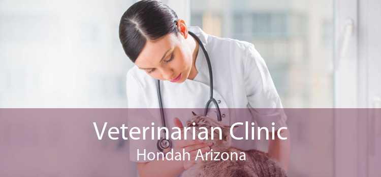 Veterinarian Clinic Hondah Arizona
