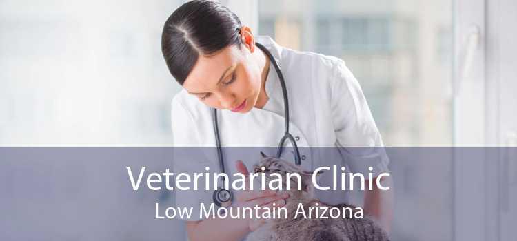 Veterinarian Clinic Low Mountain Arizona