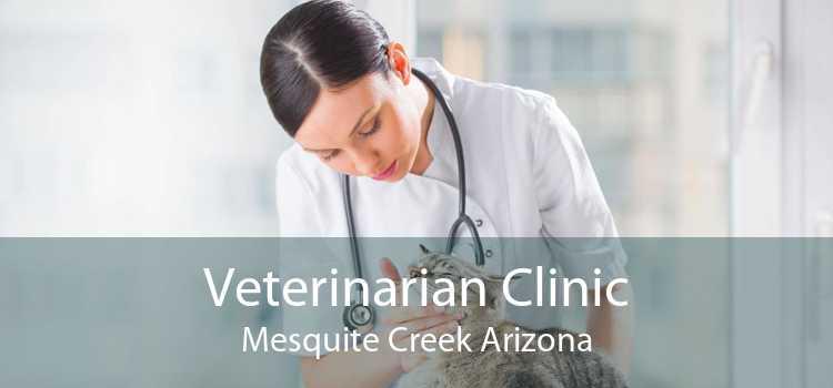 Veterinarian Clinic Mesquite Creek Arizona