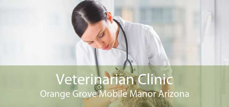 Veterinarian Clinic Orange Grove Mobile Manor Arizona