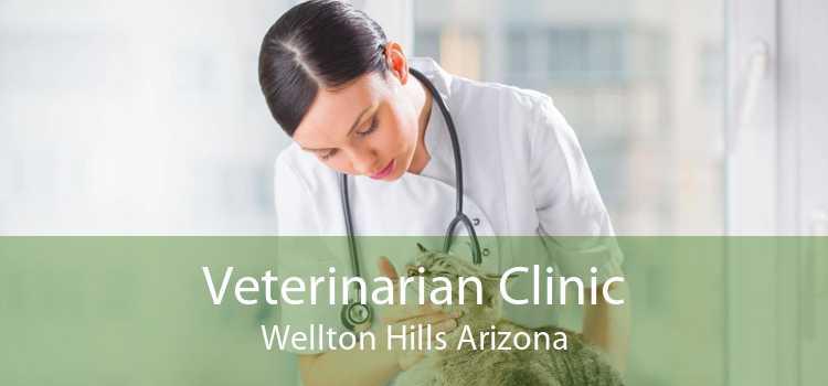 Veterinarian Clinic Wellton Hills Arizona