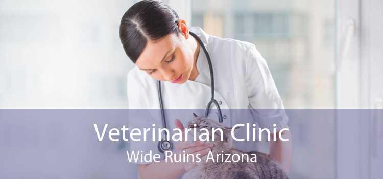 Veterinarian Clinic Wide Ruins Arizona