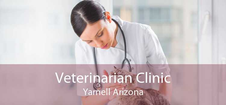 Veterinarian Clinic Yarnell Arizona
